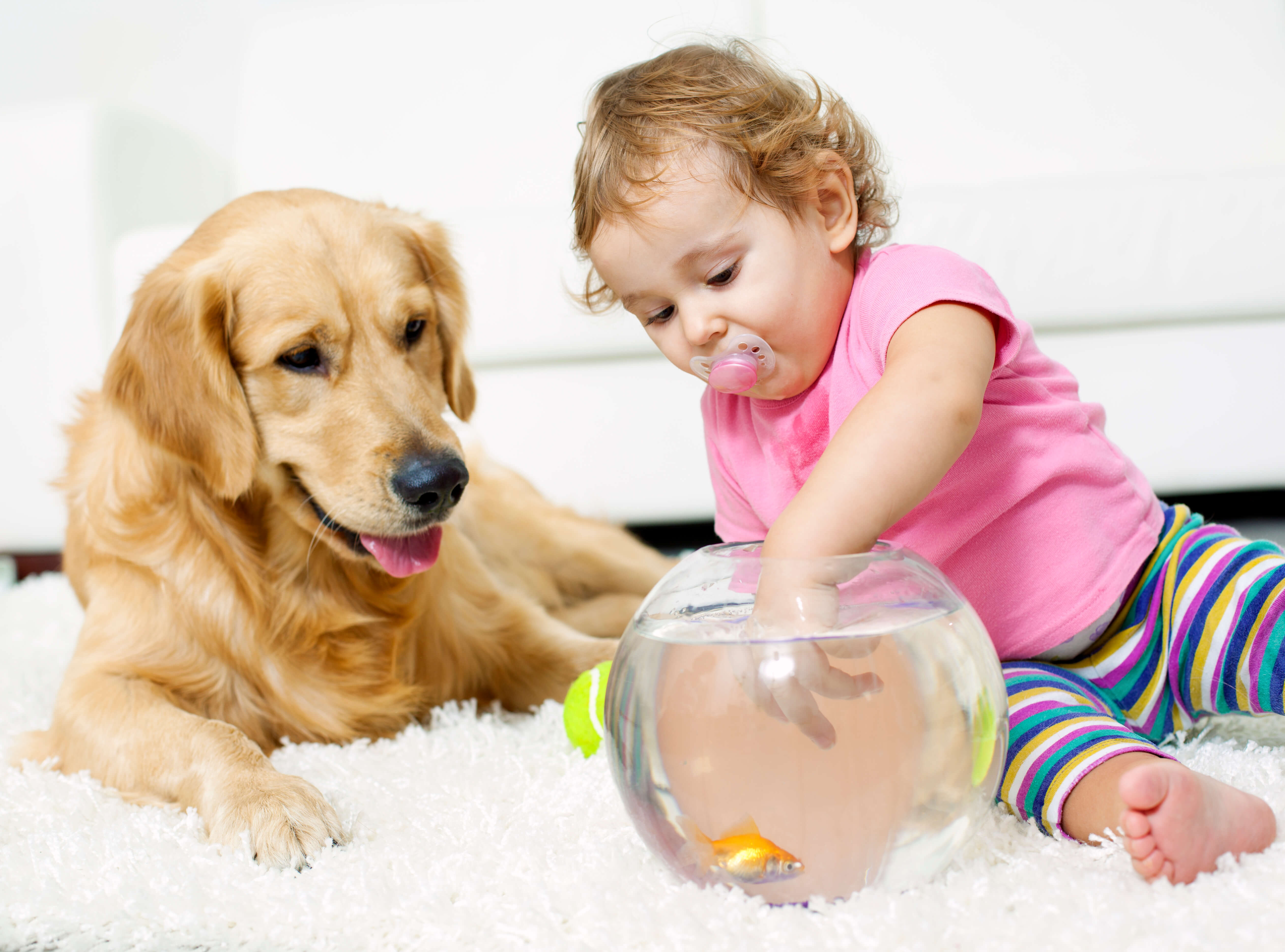 kid and pets playing on clean carpet